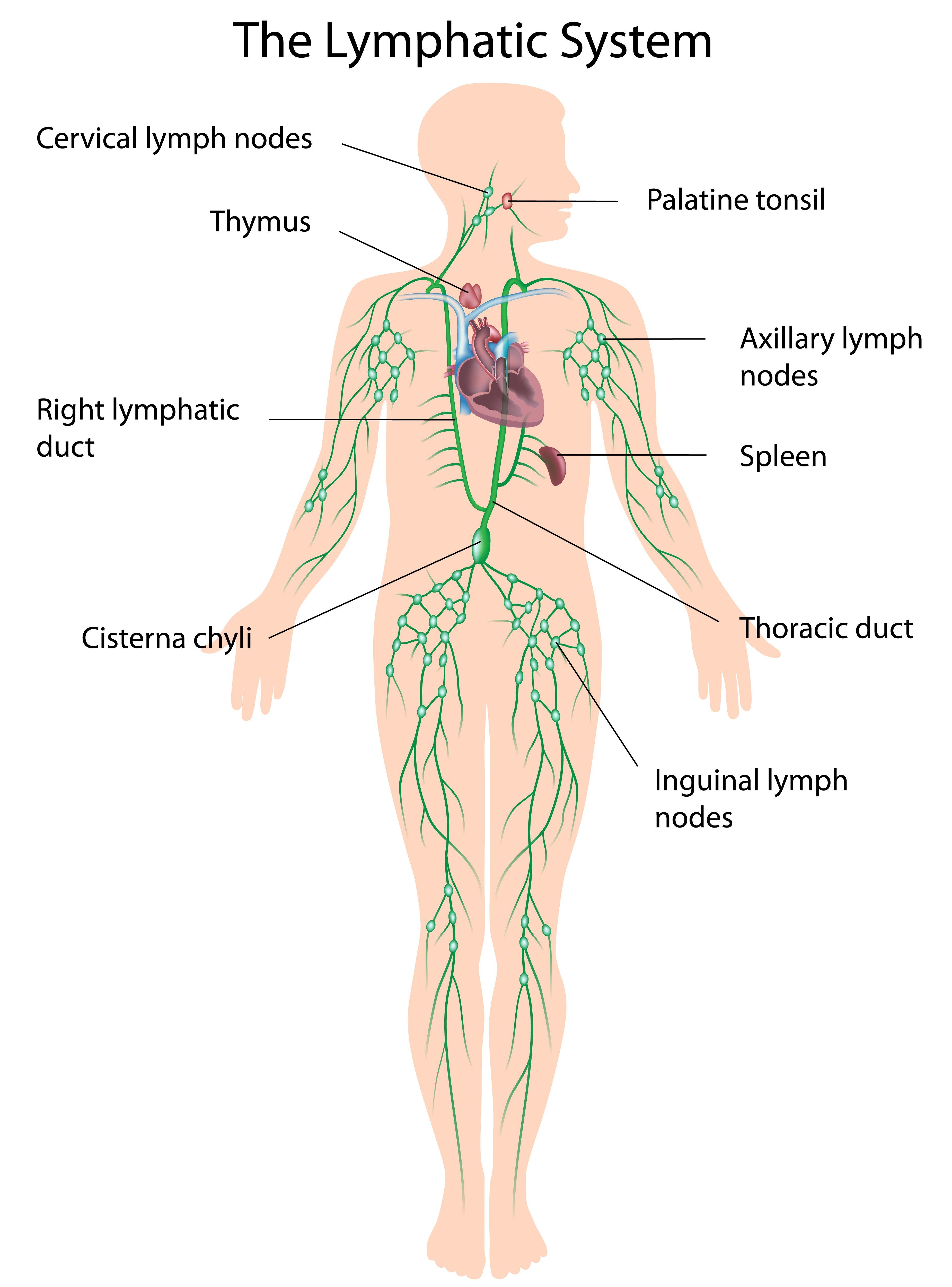 Lymphedema | Alaska Vein Clinic